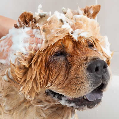 How to Wash and Groom Your Dog